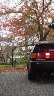 秋バラスポ3